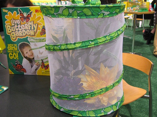 Insect Lore – bugs bugs bug kits