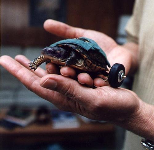 Turtle wheels