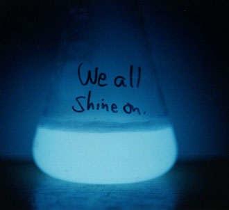 HOW TO – Grow bioluminescent bacteria