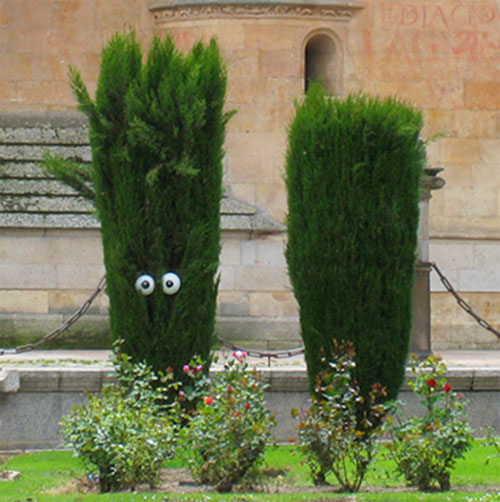 The trees have eyes (and the bushes do too)
