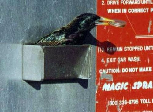 Is it happening? Birds are stealing money