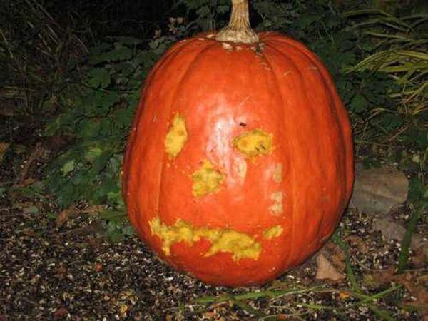 """""""Self-Carving"""" Pumpkin"""