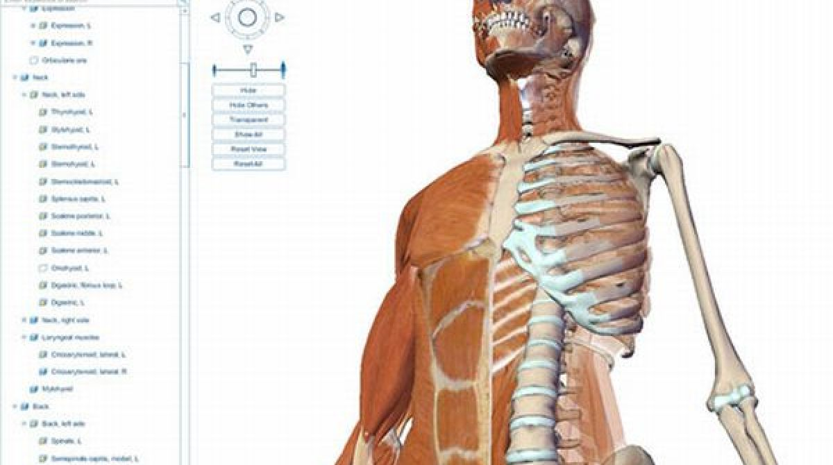 Think Anatomy learning site | Make: