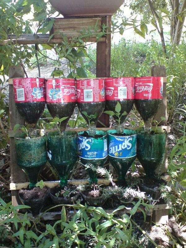 Soda bottle herb garden