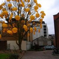 Image (1) umbrellatree.jpg for post 61601