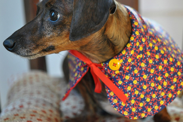 Etsy's Top 10 List for the Active Pet
