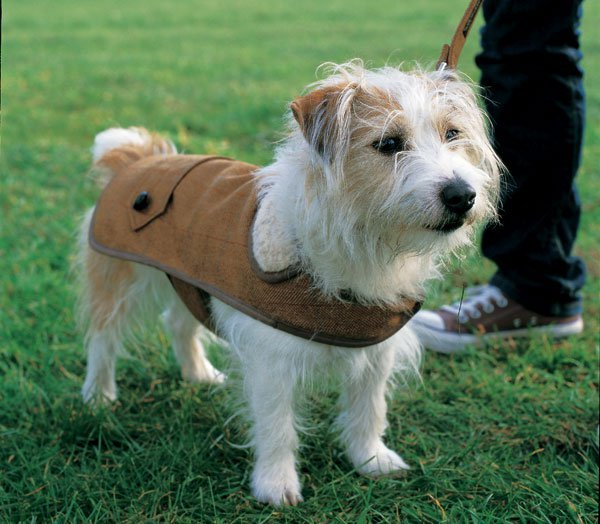 How To: Country Gent Tweed Coat for Your Dog