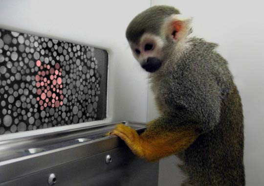 How-To:  Cure colorblindness in an adult primate