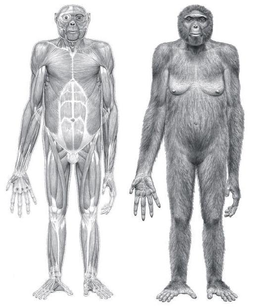 An older human ancestor than Lucy