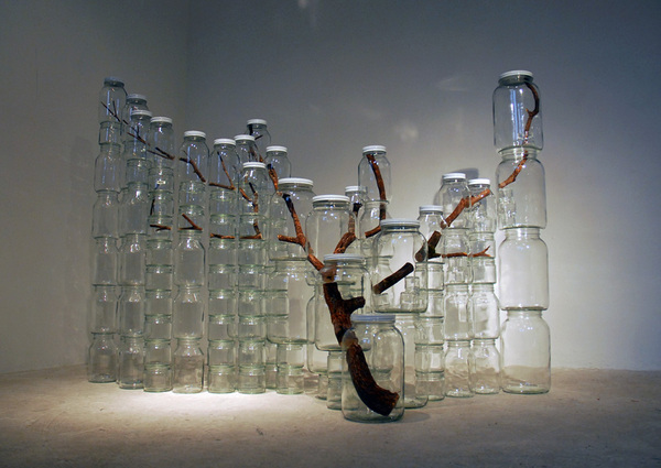 Tree branch in a jar…well, a bunch of jars