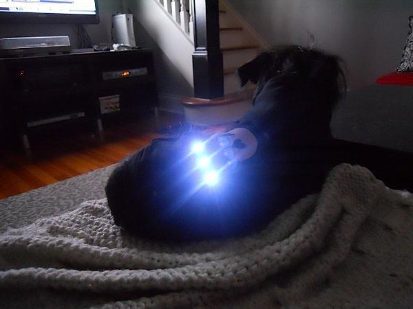 Soft circuit hoodie warms, illuminates lucky dog
