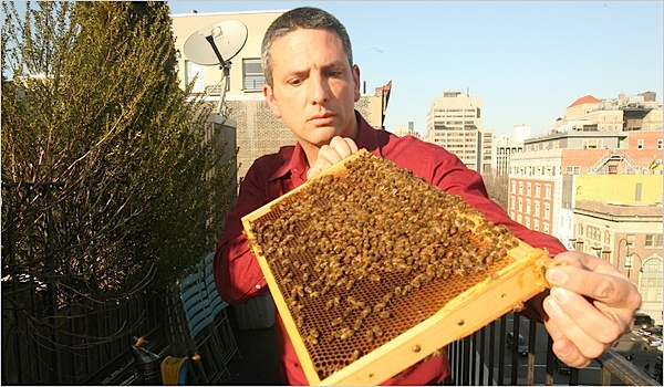 NYC health officials decide to allow beekeeping