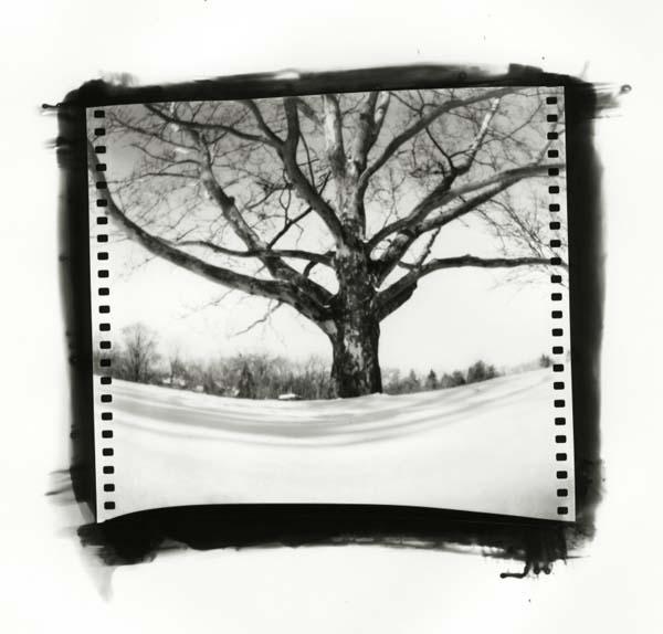 Pinhole photo contest