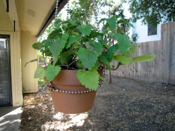 Make: Projects – Ball-chain plant hangers