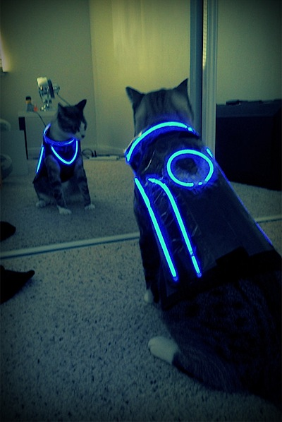 Tron cat