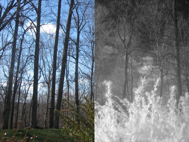 How-To: Mod a Point-and-Shoot for Infrared Photography