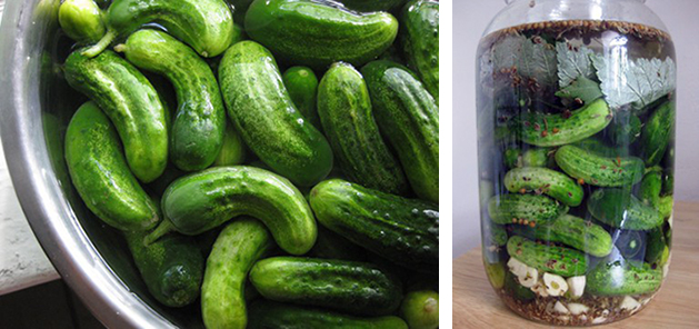 DIY Bubbies Pickles