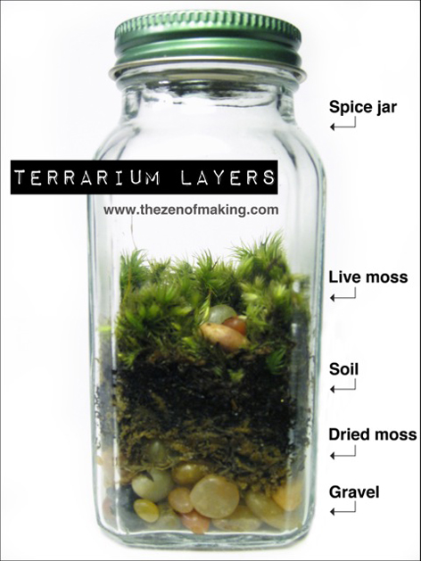 Spice Jar Terrriums