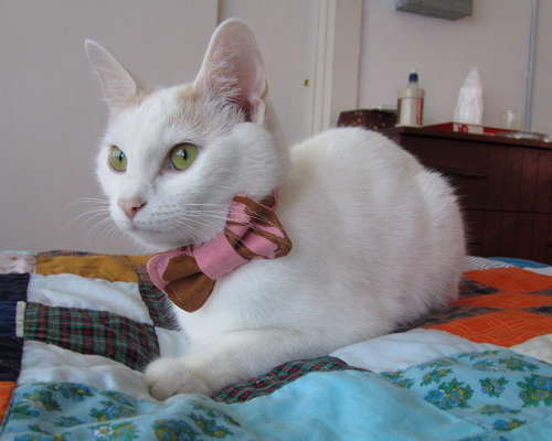 How-To: Bow Tie For Your Cat