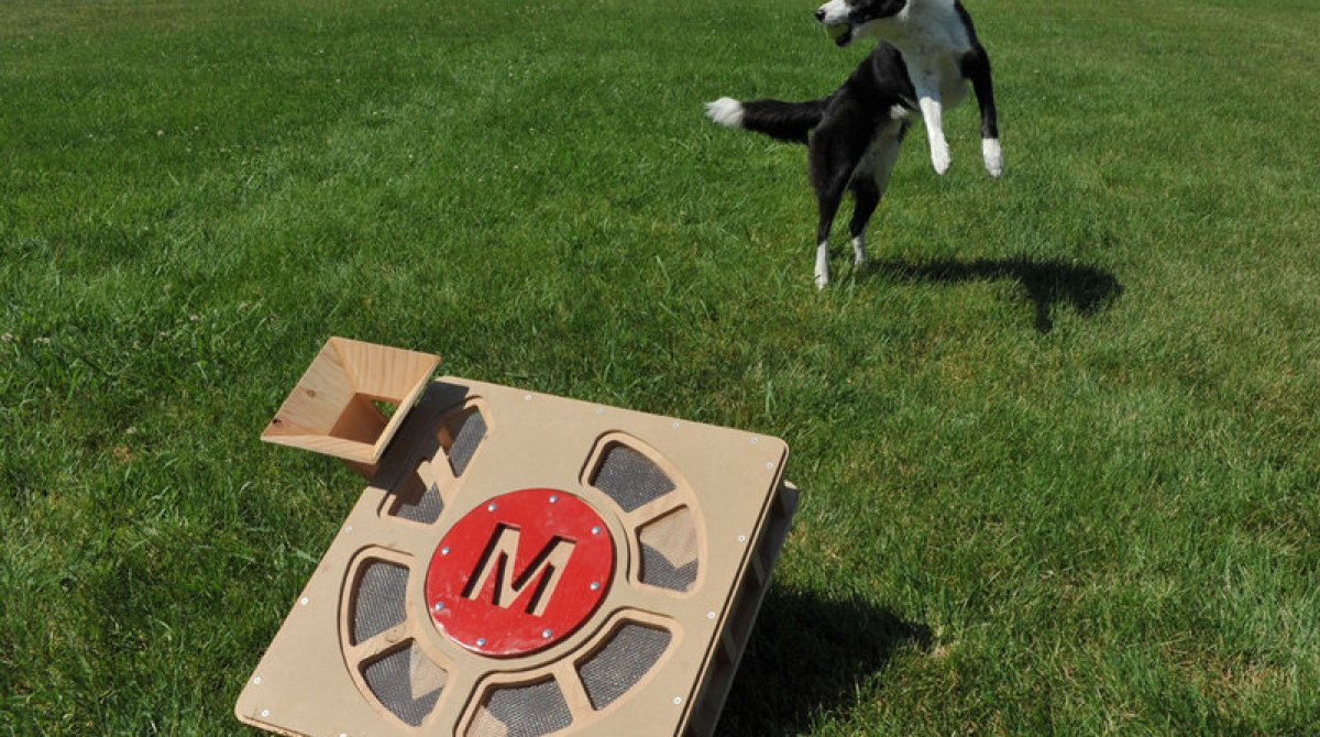 8 Projects Your Pets Need You to Make