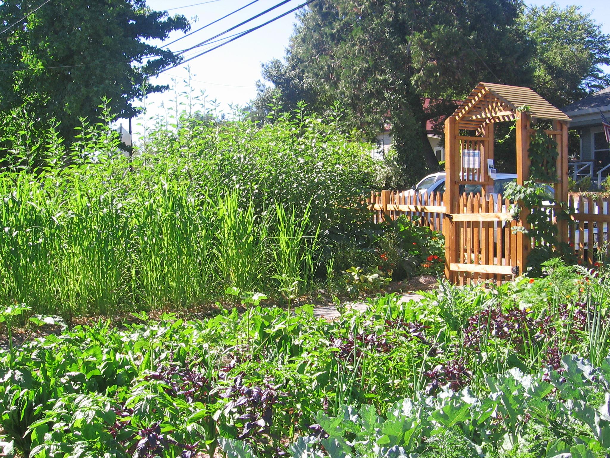 Making the Energy Garden