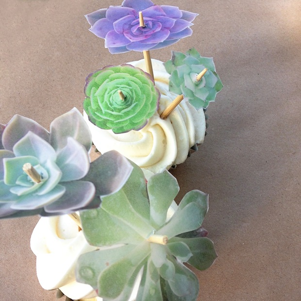 How-To: Succulent Decorated Cupcakes