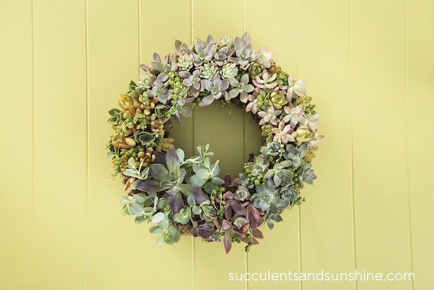 How-To: Succulent Wreath