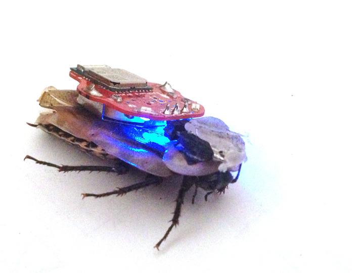 Return of the RoboRoach