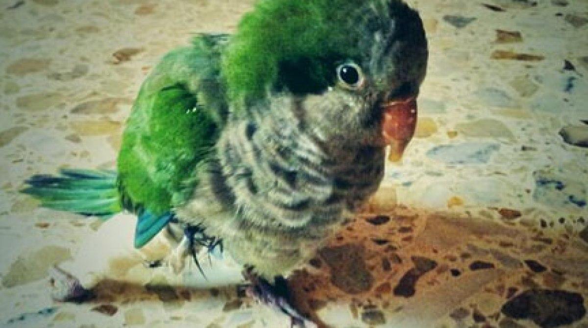 Raspberry Pi Helps a Healing Bird