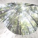 3D Printing in a Redwood Forest