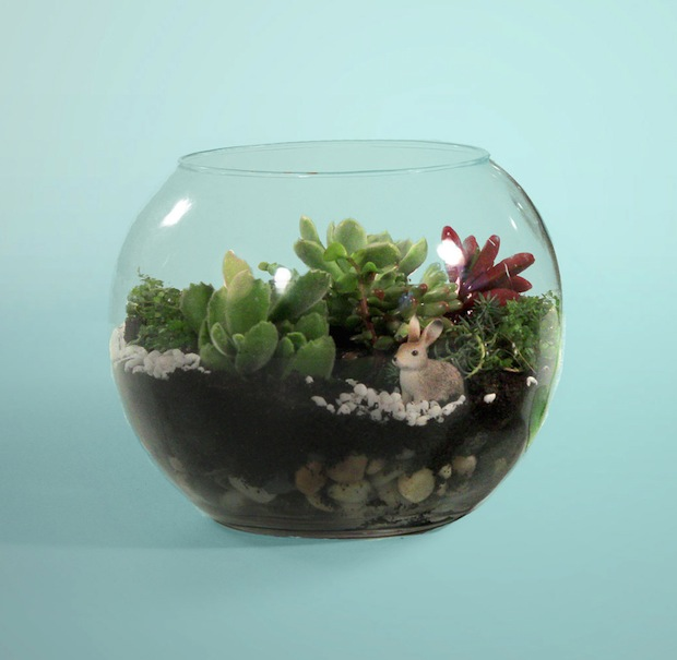 How-To: Make a Terrarium