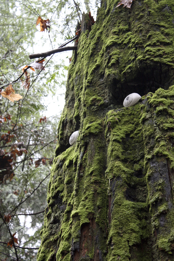 Porcelain Eyes Turn Tree Stumps into Forest Sentinels