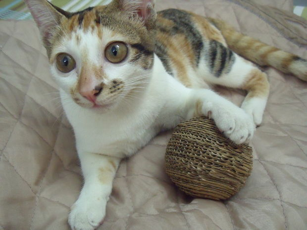 How-To: Cardboard Cat Toy