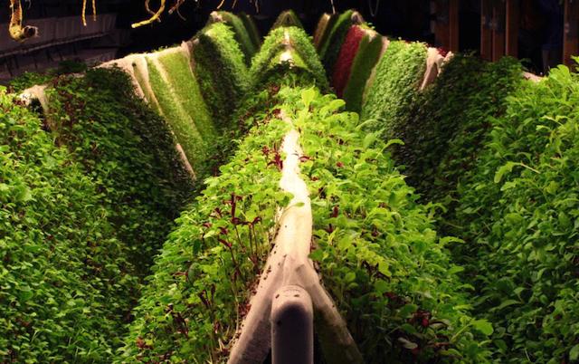 Space-Age Gardening: Aquaponics, Hydroponics, and Aeroponics