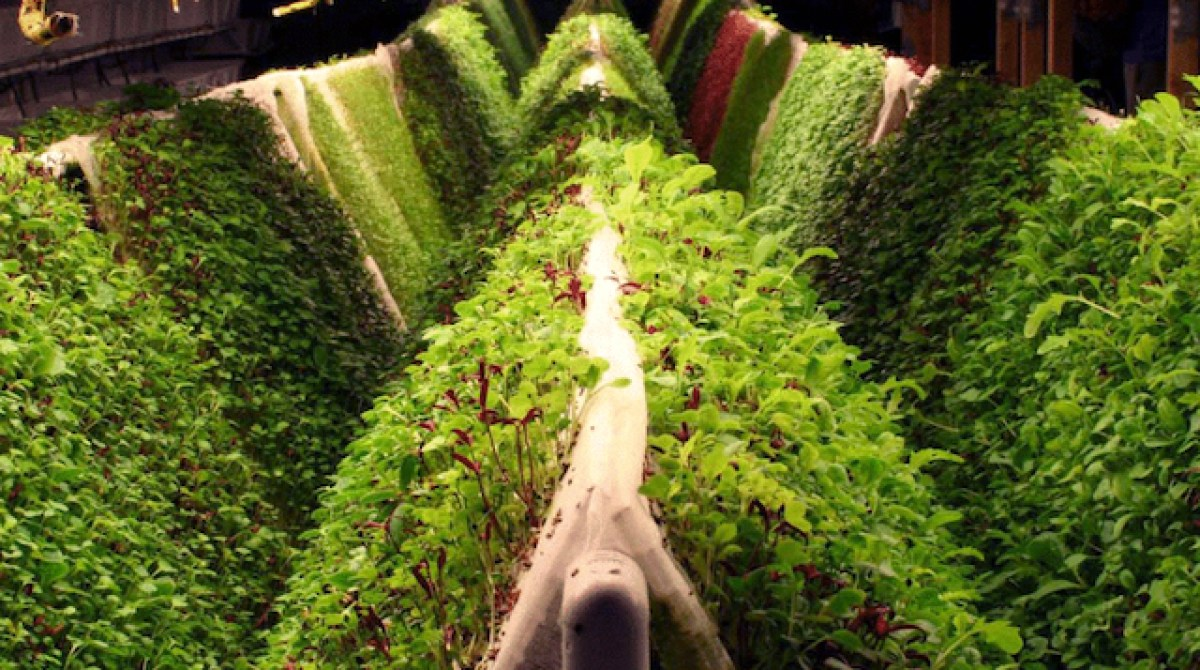 Space-Age Gardening: Aquaponics, Hydroponics, and Aeroponics