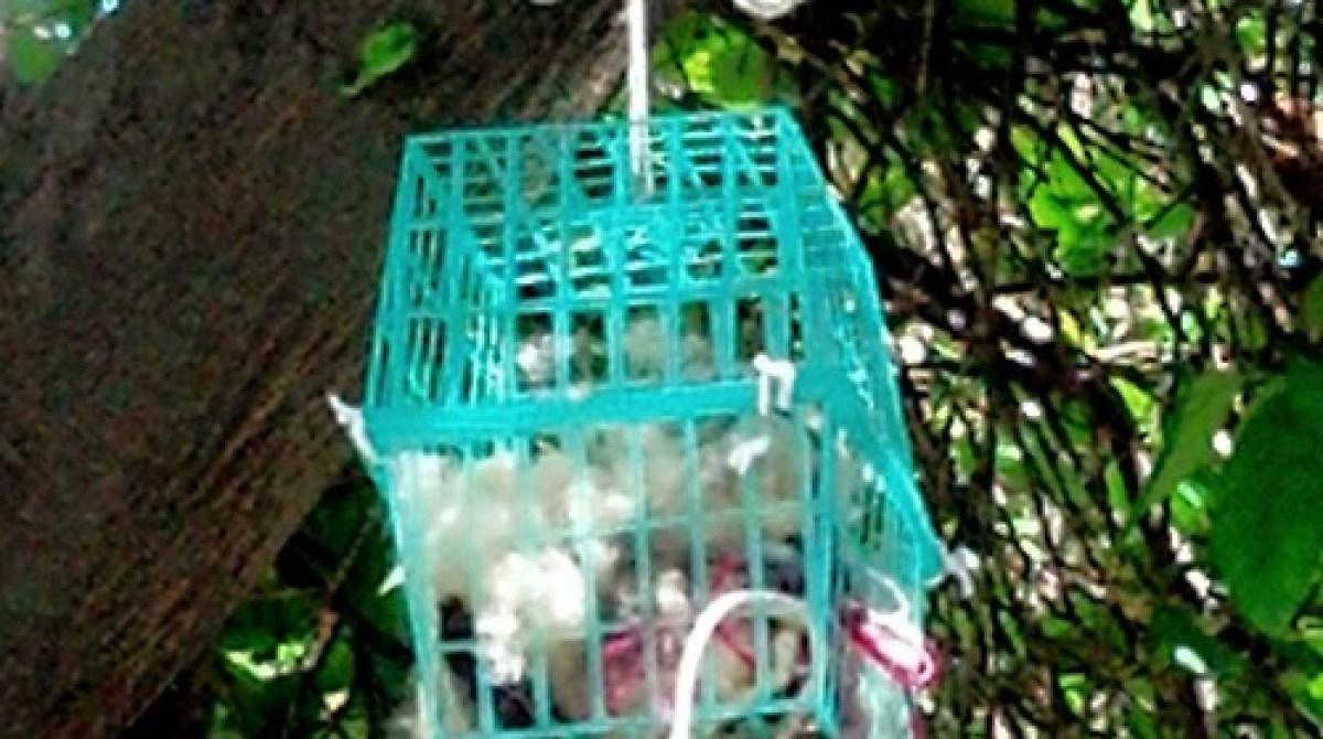 How-To: Homemade Bird's Nest Fiber Dispenser