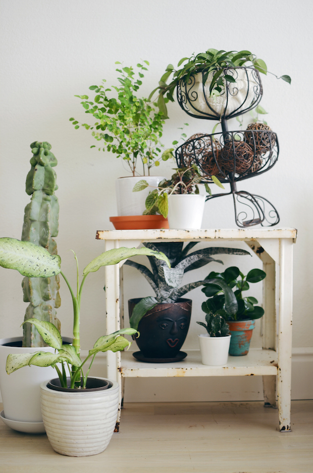 Home Tip: Keeping Indoor Plants Alive