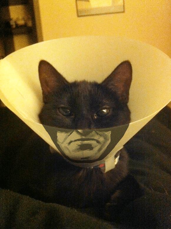 """""""Catman"""" Customized Cone Cat Collar"""
