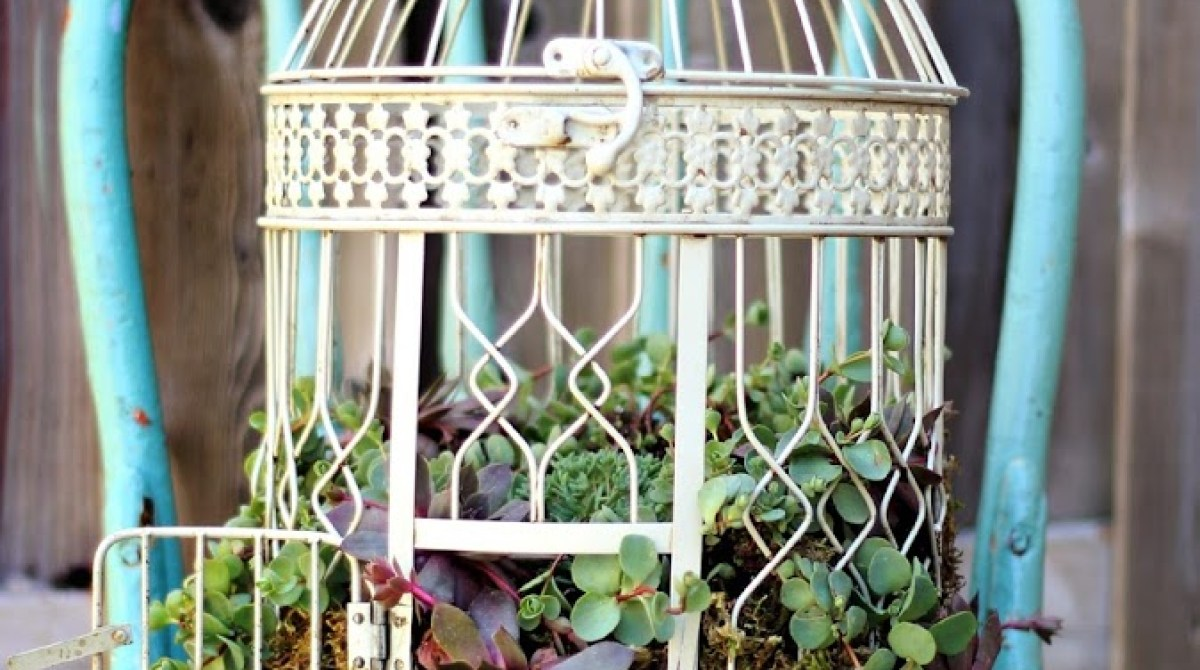Turn An Old Birdcage Into An Ornate Succulent Planter
