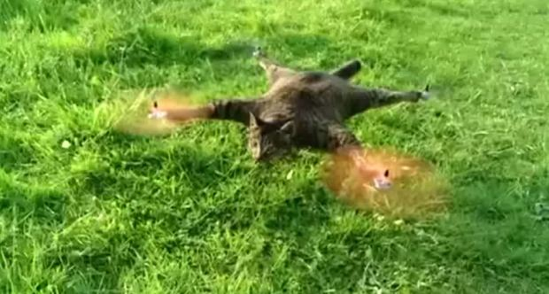 cat-drone