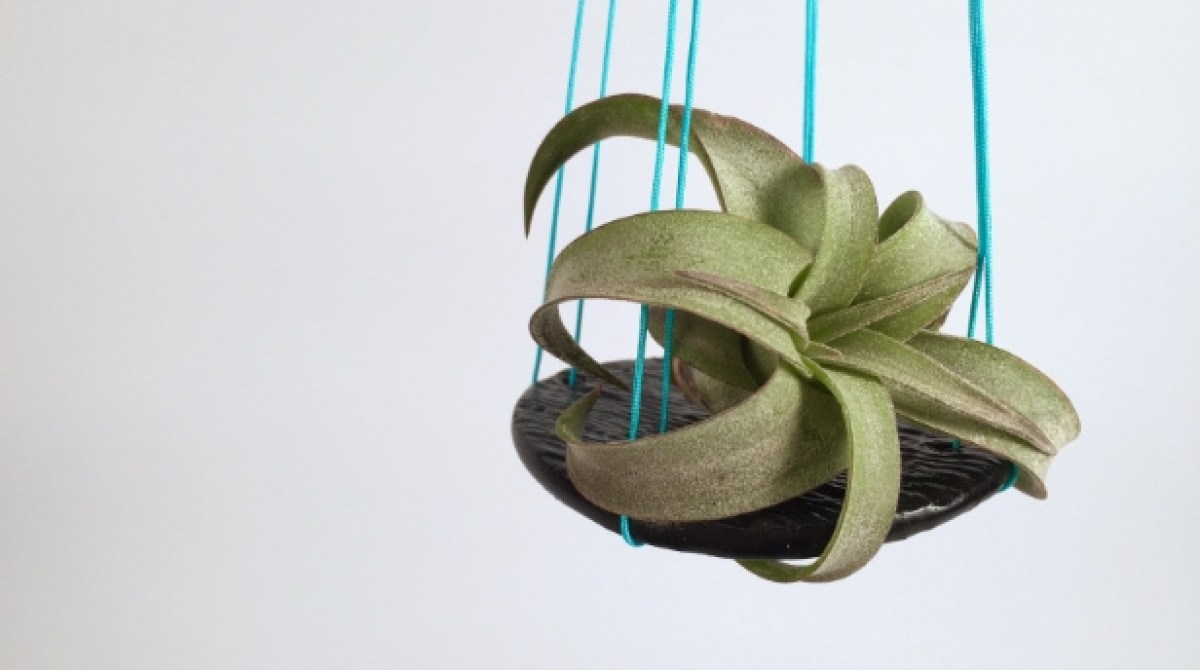 Living Decor: Simple Hanging Air Plant Holders