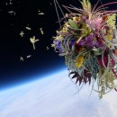 Artist Sends Plants to Space for Weirdly Poignant Photos