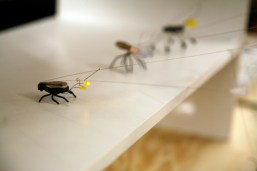 Ken Murphy's Blinkybugs were a big hit that weekend.