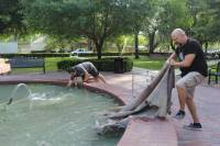 For the heads we used Florida Buffalo hides. It was hard, so we had to soak the hides in our school's fountain for three days to get it ready for stretching. I was not prepared for how bad it smelled when it came out of the water!