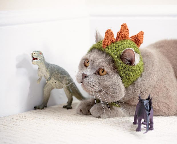 Cats in Hats: Knit a Dinosaur Hat or Crochet a Fox Hat for Your ...