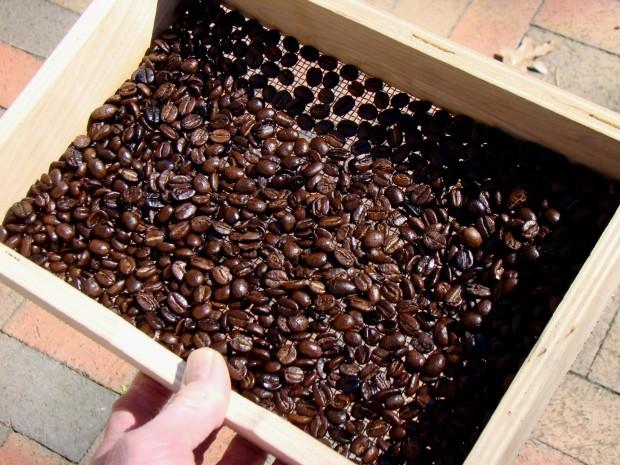 A nice batch of beans.