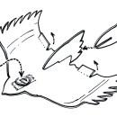 Create a 5-Minute Foam Plate Flying Falcon