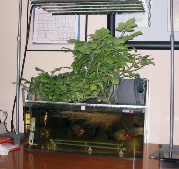 original-aquaponics-system