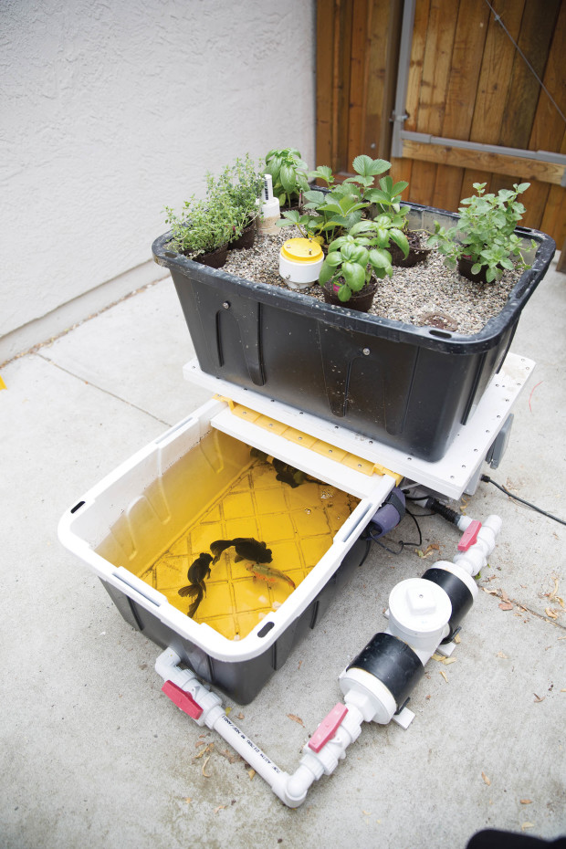 Build An Aquaponic Garden With Arduino Gardening Make