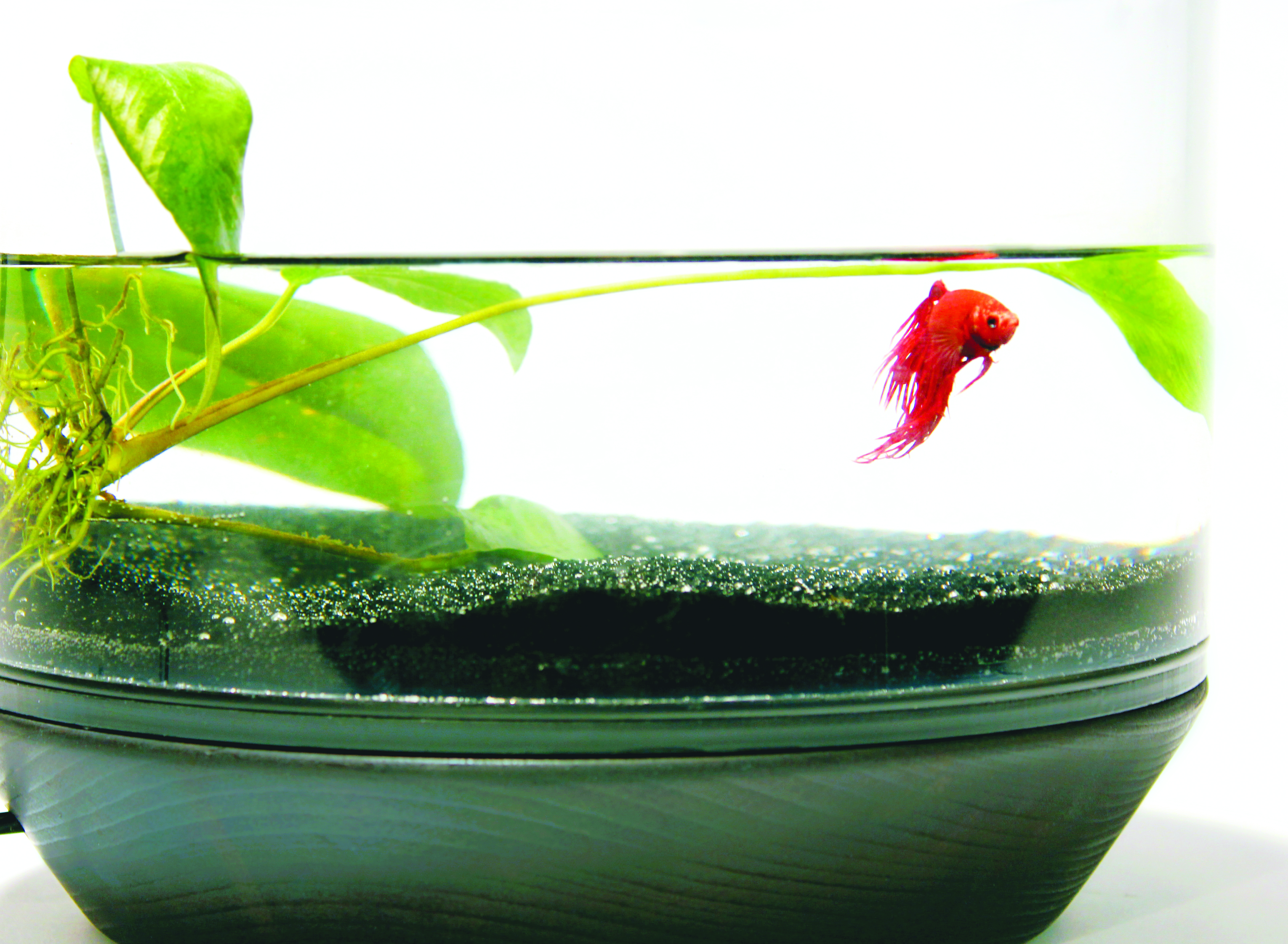 Watch a Fish Drive Its Own Motorized Bowl